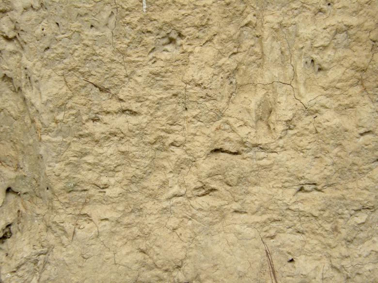 Free Stock Photo of Muddy Wall Background Texture Created by Free Texture Friday