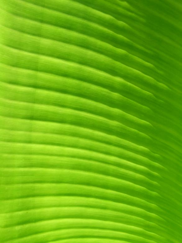 Free Stock Photo of Leaf Created by Janaka Dharmasena