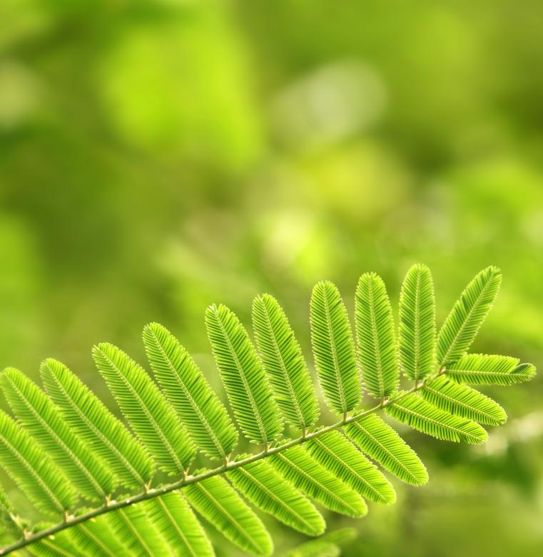 Free Stock Photo of Green leaf Created by Janaka Dharmasena