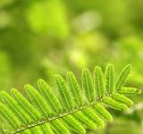 Free Photo - Green leaf
