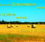 Free Photo - Plant Seeds of Peace
