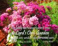 Free Photo - Transplanted to God's Own Garden
