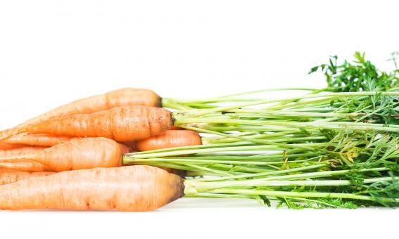 Carrot - Free Stock Photo