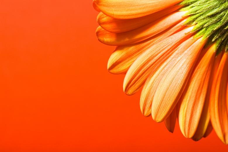 Beautiful flower Free Stock Photo