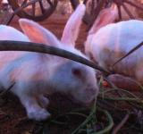 Free Photo - Two Rabbits