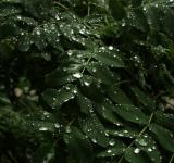 Wet leaves - Free Stock Photo