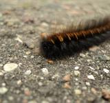 Free Photo - Caterpillar