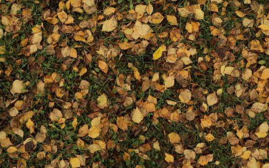 Leaf litter - Free Stock Photo