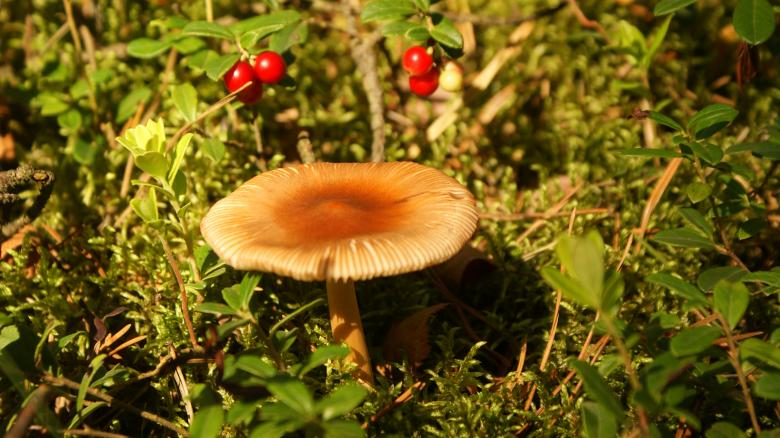 Free Stock Photo of Mushroom 1 Created by Anna Em
