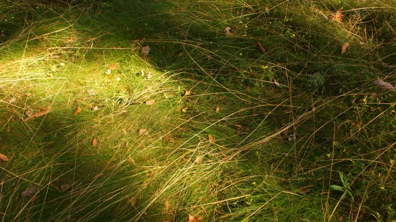 Free Stock Photo of Grass 1 Created by Anna Em