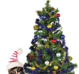 Free Photo - Christmas Kitten