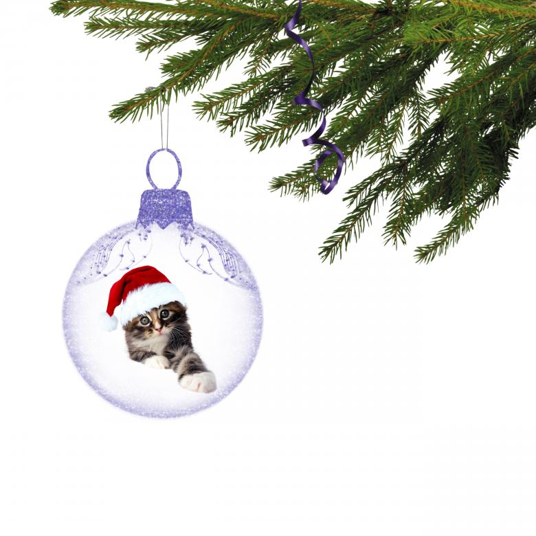 Free Stock Photo of Christmas Kitten Created by Diana