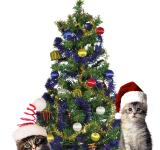 Free Photo - Christmas Cats