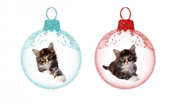 Christmas Kittens - Free Stock Photo
