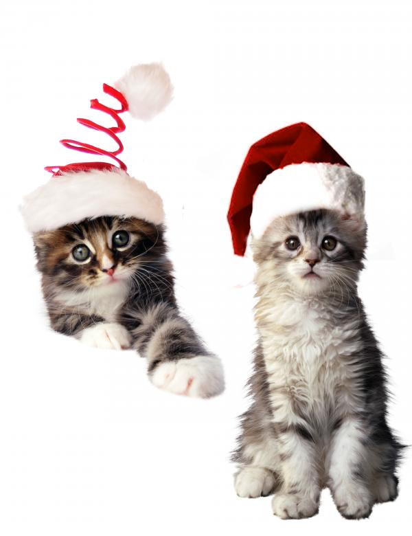 Free Stock Photo of Christmas Cats Created by Diana