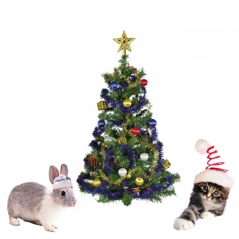 Free Stock Photo of Christmas Pets Created by Diana