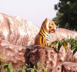 Free Photo - Tiger on hill