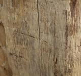 Free Photo - Wood texture