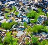 Free Photo - grass and stones