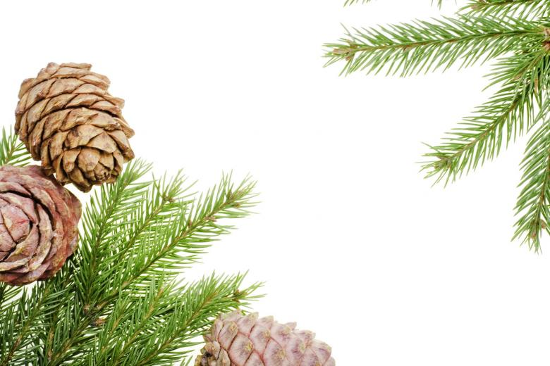 Free Stock Photo of Pine branches Created by 2happy