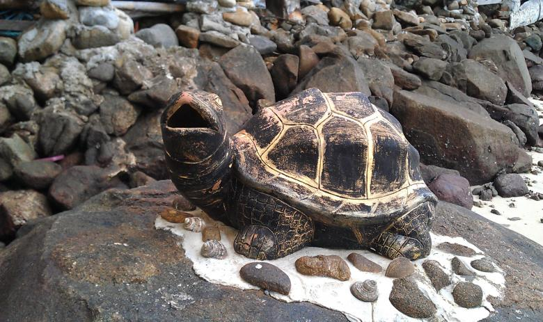 Free Stock Photo of Turtle Created by zimy