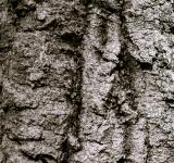 Free Photo - Wood crust