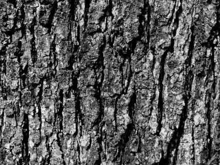 Wooden crust - Free Stock Photo
