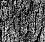 Free Photo - Wooden crust
