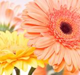 Free Photo - flower background
