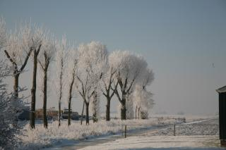 Download Winter Trees Free Photo