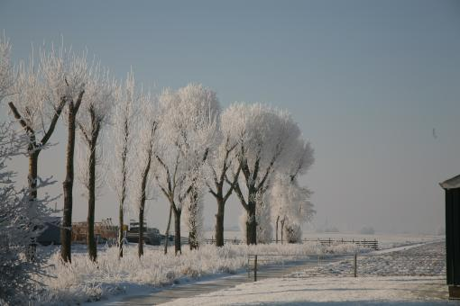 Winter Trees - Free Stock Photo