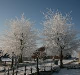 Free Photo - Winter Trees