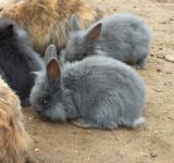 Free Photo - Rabbits