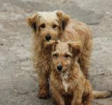 Free Photo - Brown dogies