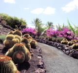 Free Photo - Cactus Park in Fuerteventura
