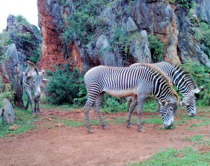 Zebra in an open Zoo in Northern Spain - Free Stock Photo