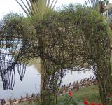 Free Photo - An elephant