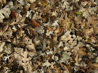 Fallen Leaves Texture Free Photo