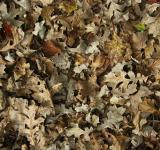 Free Photo - Fallen Leaves Texture