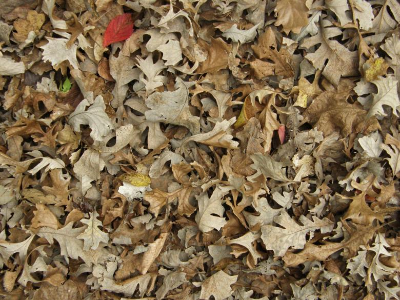 Free Stock Photo of Fallen Leaves Texture Created by Free Texture Friday