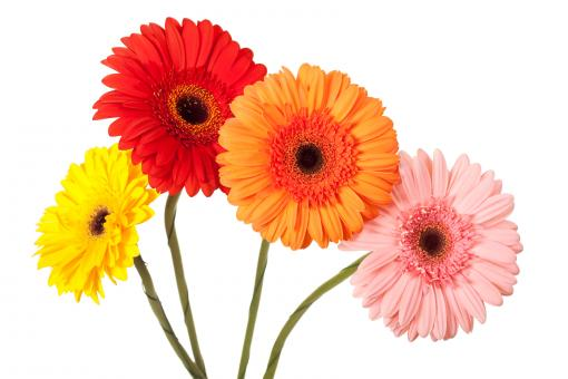 Colored flowers - Free Stock Photo