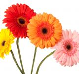 Free Photo - Colored flowers