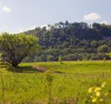 Free Photo - summer landscape