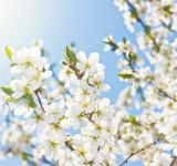 Free Photo - Spring Background