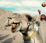 Free Photo - A happy camel and boy