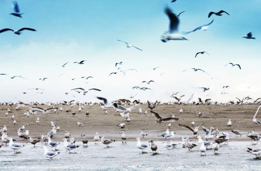 Seagulls on beach - Free Stock Photo