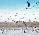 Free Photo - Seagulls on beach