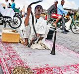 Free Photo - Snake Charmer in morocco