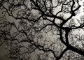 Free Photo - Tree branches with backlight