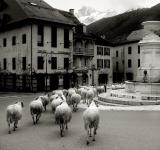 Free Photo - Sheep in old french village